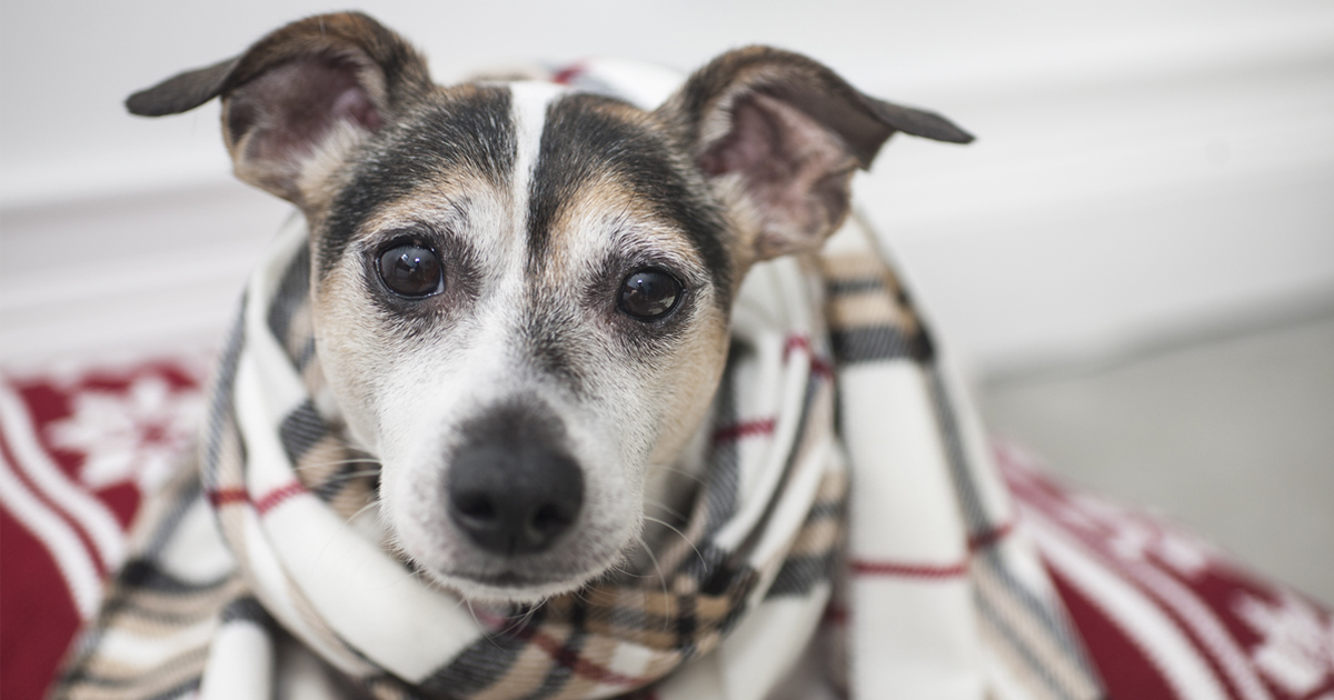 dog in Christmas scarf for fundraising tips